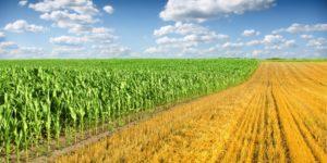 agro-processing support scheme